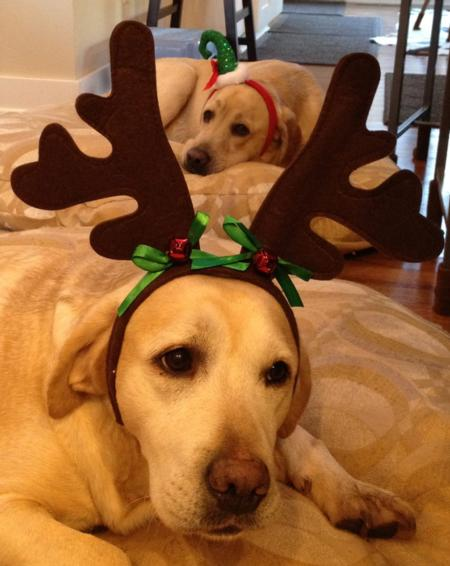 Photo: Bud and Selma's diligent elf and enthusiastic reindeer.