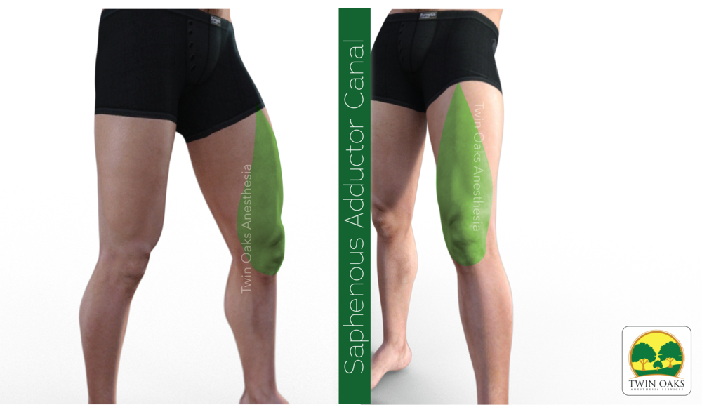 Saphenous Adductor.png