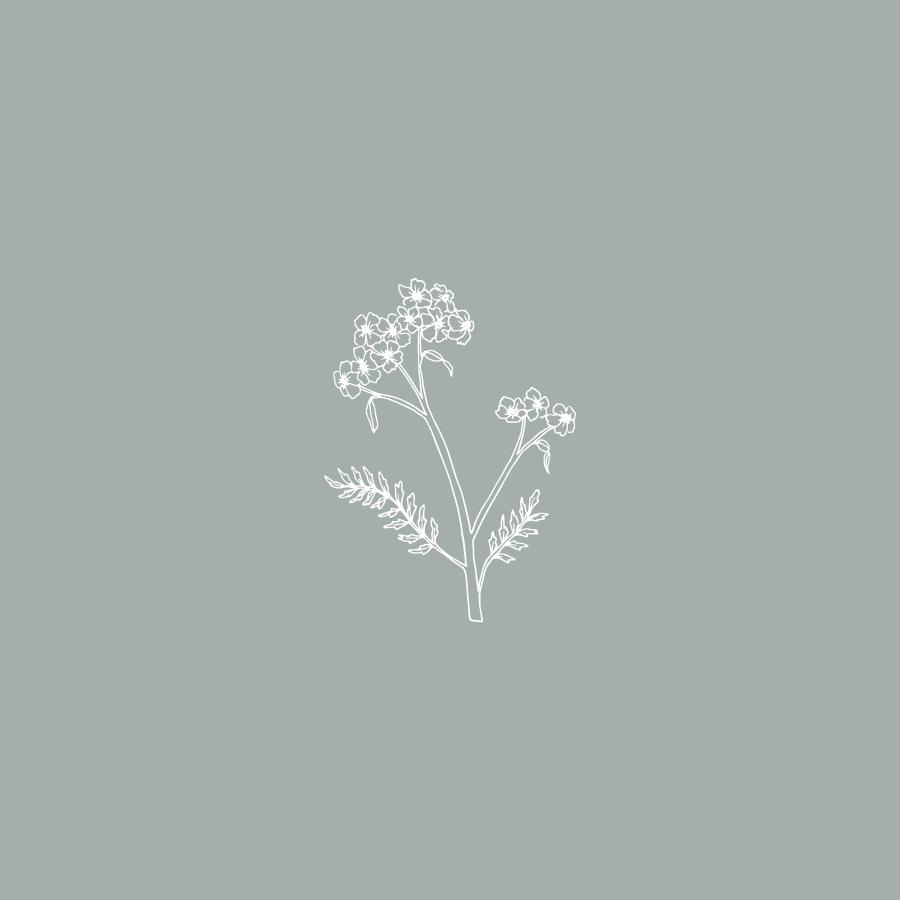 yarrow.botanic.png