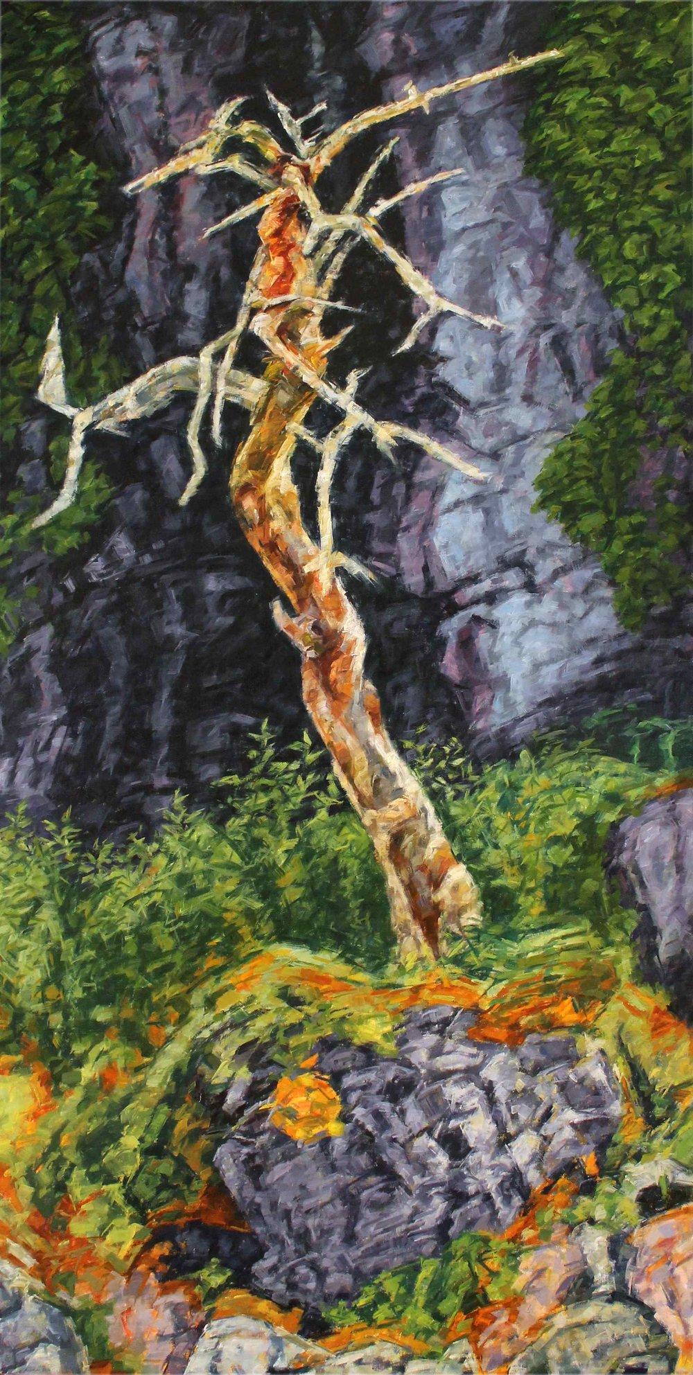 Tree - Cap-à-l'Aigle
