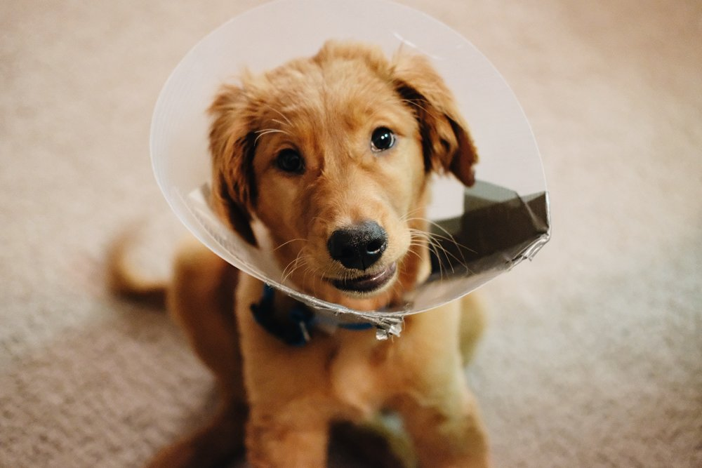 February 21, 2019 // Hello puppy, you're kinda cute.