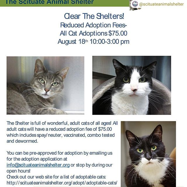 Or if you don't live near us, look for a shelter near you: https://www.cleartheshelters.com #AdoptDontShop  #RepostSave @scituateanimalshelter with @repostsaveapp ・・・ Help us Clear the Shelter this coming Saturday! It's a national effort! We will have reduced adoption fees for all adult cats. We are really hoping they will ALL find their new families.