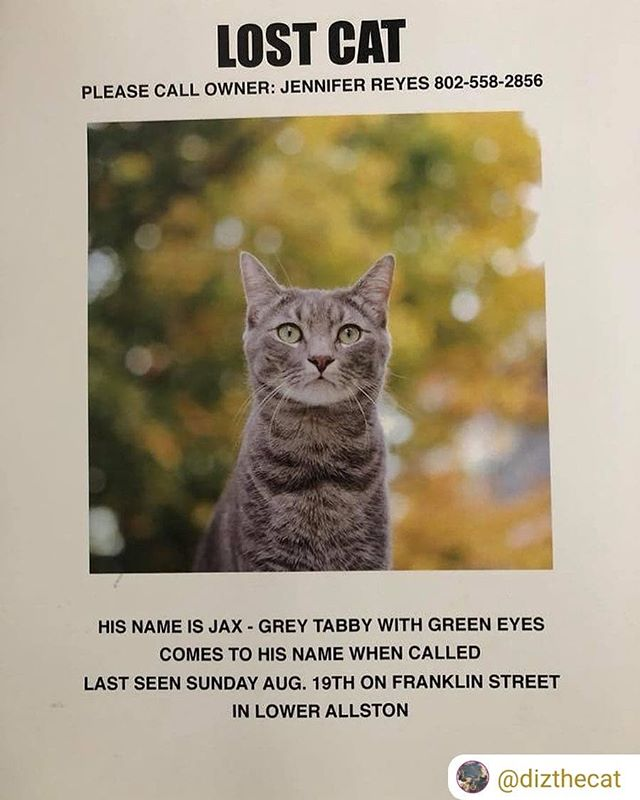 #RepostSave @dizthecat with @repostsaveapp ・・・ Boston friends, specifically Allston. Please keep an eye out for my friend Jax. He needs your help. #findjax #catsofinstagram  #allston