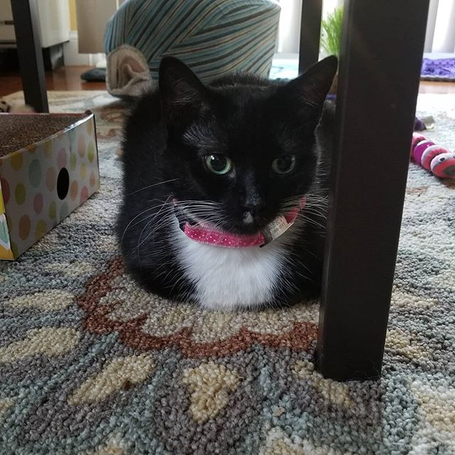 Someone's got a case of the Mondays.... #Catsagainstmondays #worldaccordingtocasey #tuxedocat #tuxedofeatures #cutecat #catstagram #catsofinstagram #petstagram #rescuecat #tuxedocatsofig