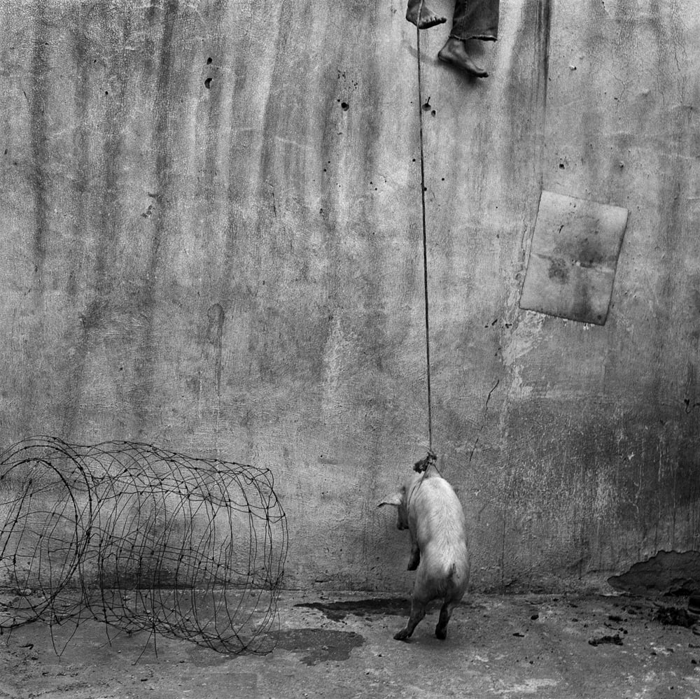 Roger Ballen - Hanging pig 2001