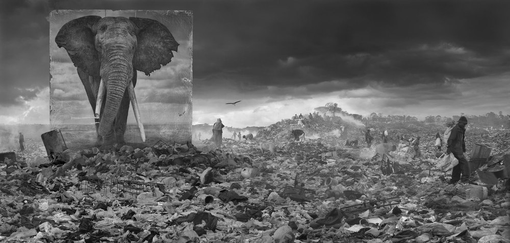 Elephant with Wasteland - Inherit the Dust - 2015 - Nick Brandt
