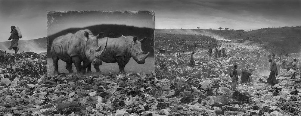 Nick Brandt  Inherit the Dust - Wasteland with rhino