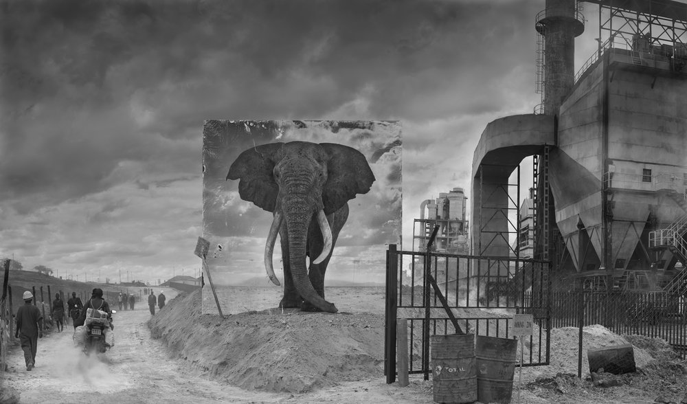 Nick Brandt  Inherit the Dust - Factory with elephant