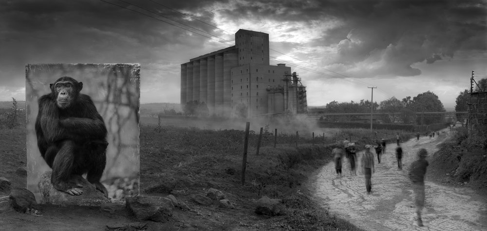 Nick Brandt  Inherit the Dust - Factory with chimpanzee