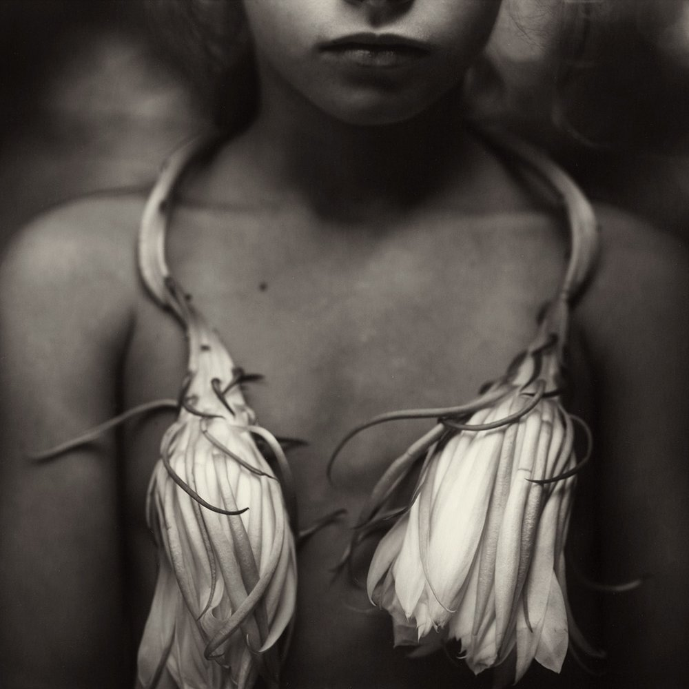 Sally mann  A Matter of Time at Fotografiska [PUG]  01.08 - 30.09.2012