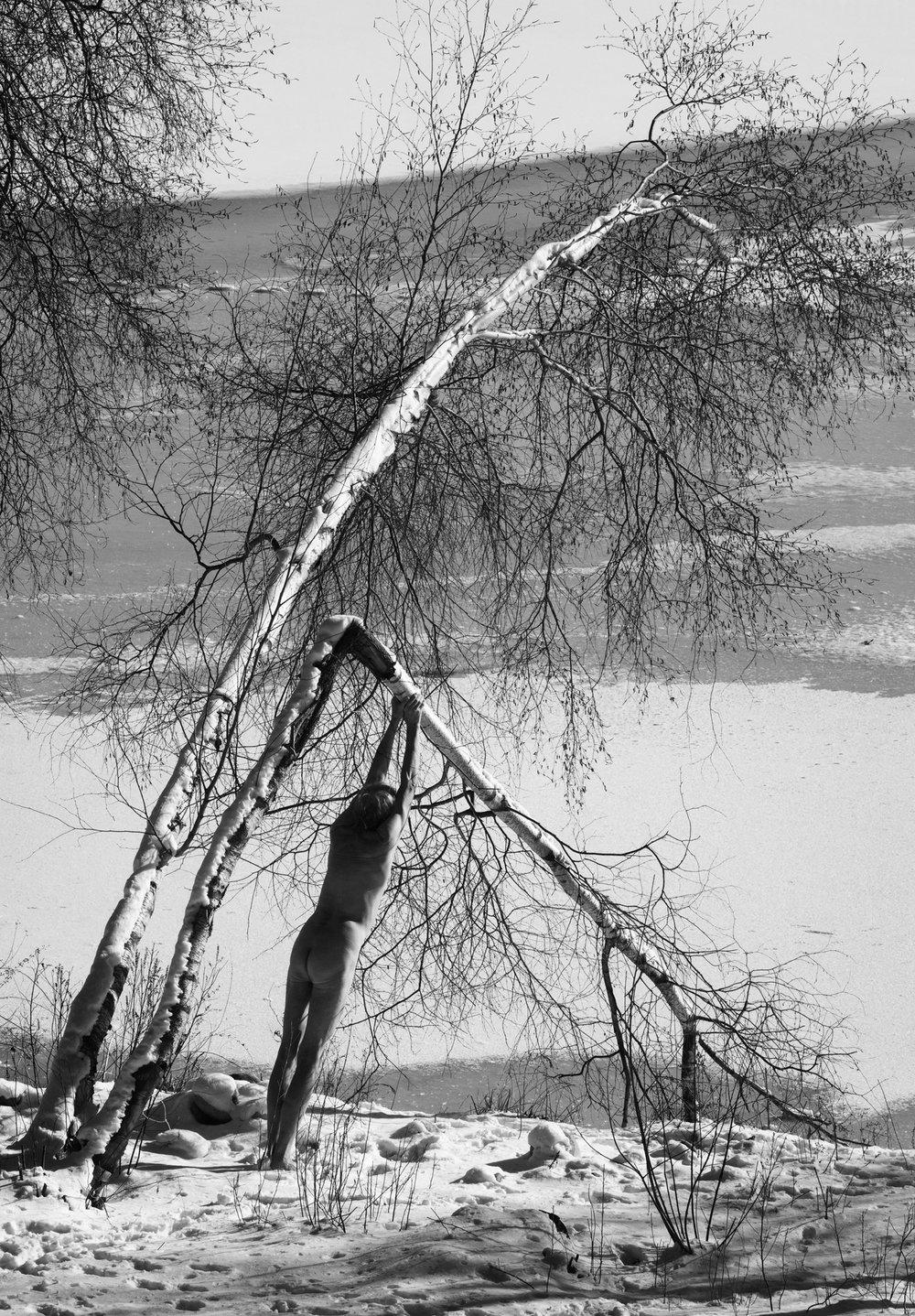 Arno Rafael Minkkinen - Broken Birch - 2017