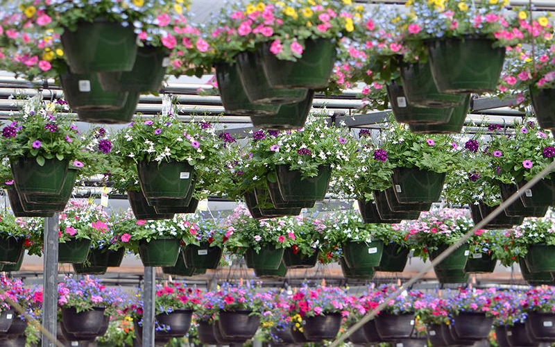 wenke-wholesale-hanging-baskets.jpg