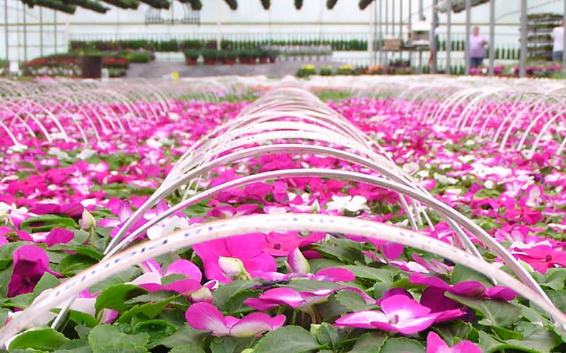 wenke-wholesale-spring-crops2.jpg