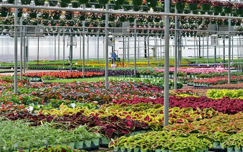 wenke-wholesale-spring-crops-3.jpg