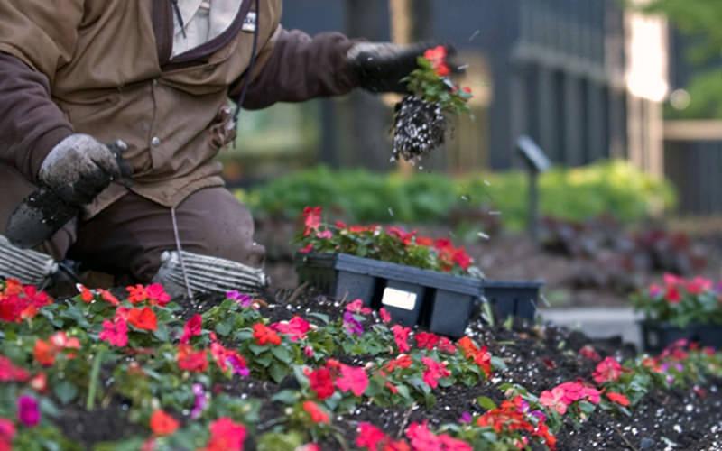 wenke-greenhouses-landscaper.jpg