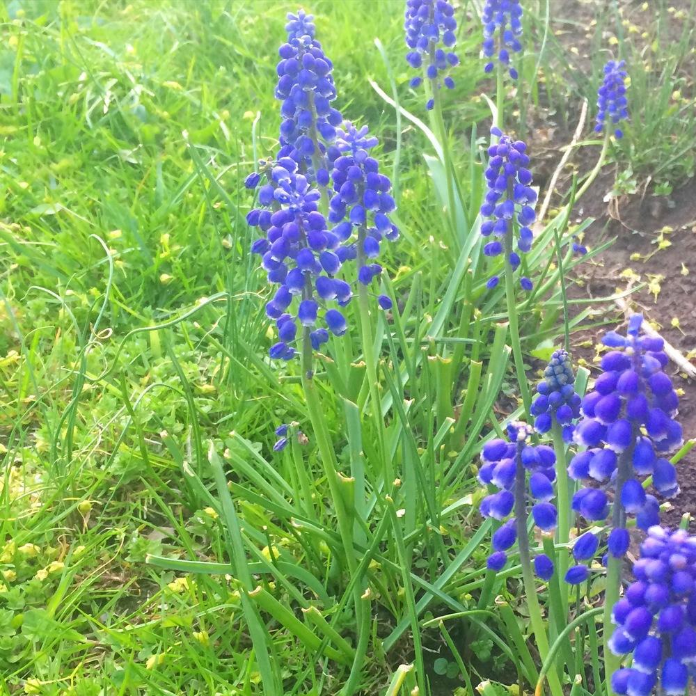 At last, spring arrives
