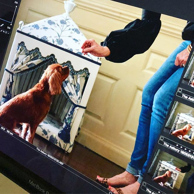 LADY-like. Back of the camera action on set w the talent (canine + human) - @merriweatherdogbeds - you've got to check them out - bespoke, outrageous, amazing-ness for 🐶 dreamt up + designed by @agm360. So beautifully captured @janebeilesphoto - more in the story. #whattaday #dogsofinstagram