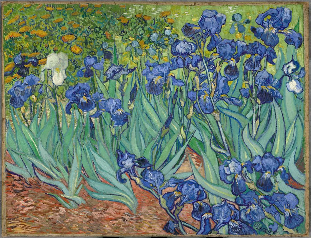 Vincent Van Gogh,  Irises