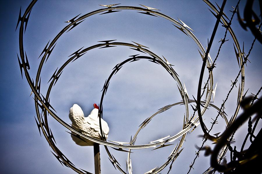 Bird on a Wire.jpeg