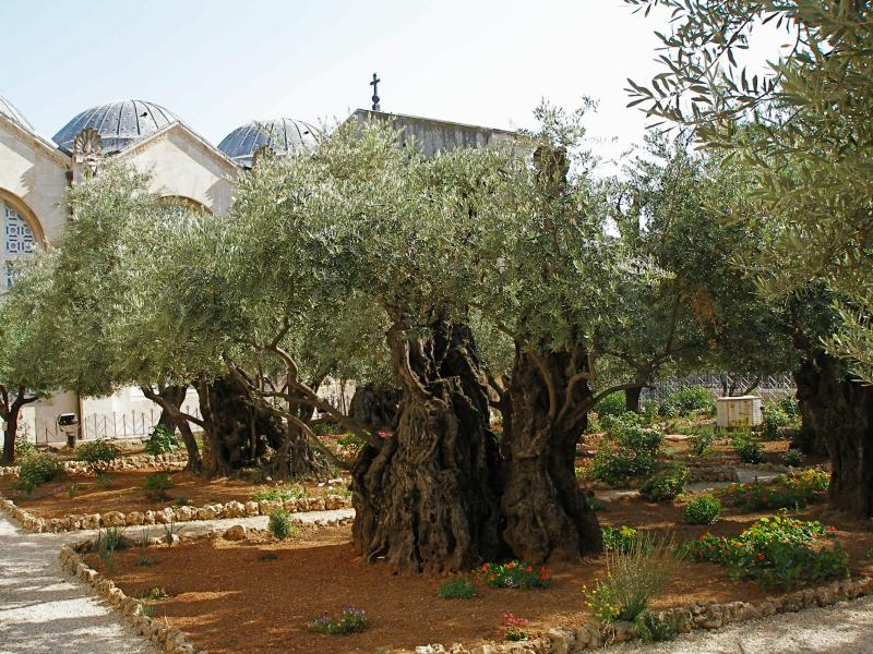 image1_Gethsemanegarden.jpeg