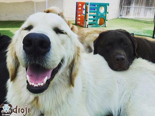 Friday feels ✌🏻🐶💖 #diojisb #goldenretrieversofinstagram #goldenretrieverpuppy #dogsofsantabarbara