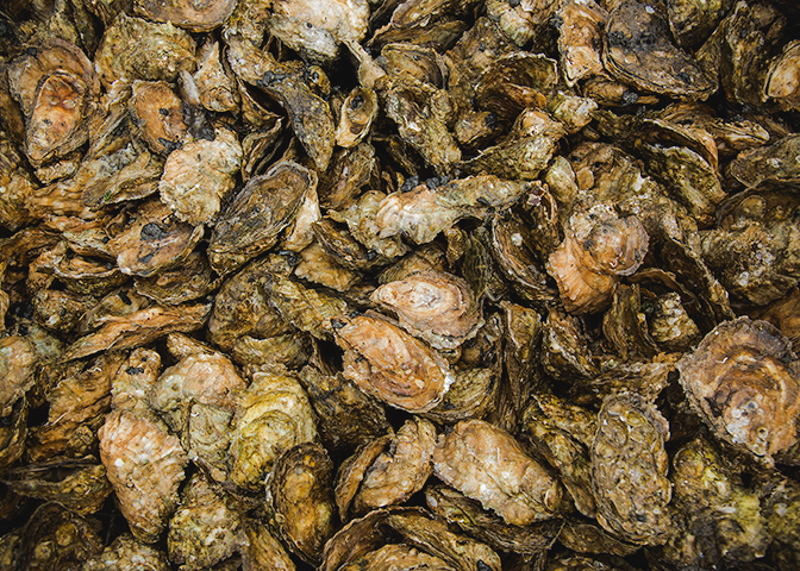 Shootingpoint_oysters_virginia (2 of 4).jpg