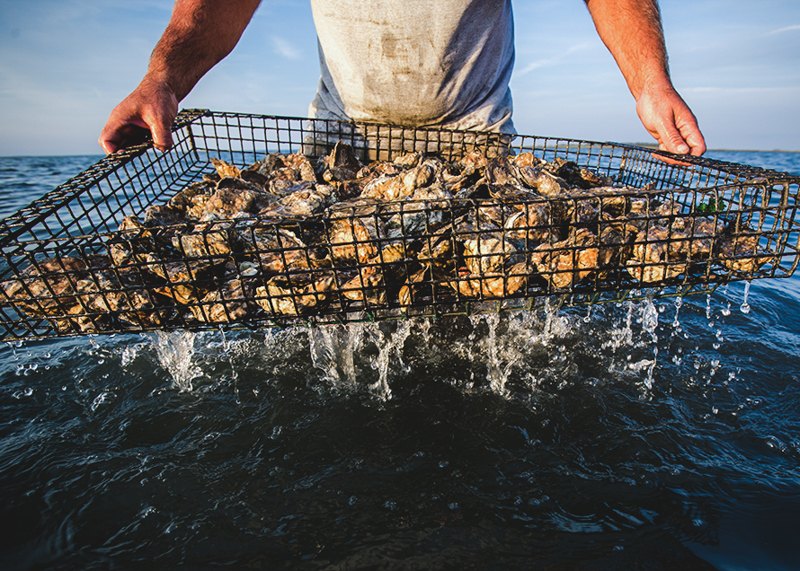Shootingpoint_oysters_virginia (4 of 4).jpg
