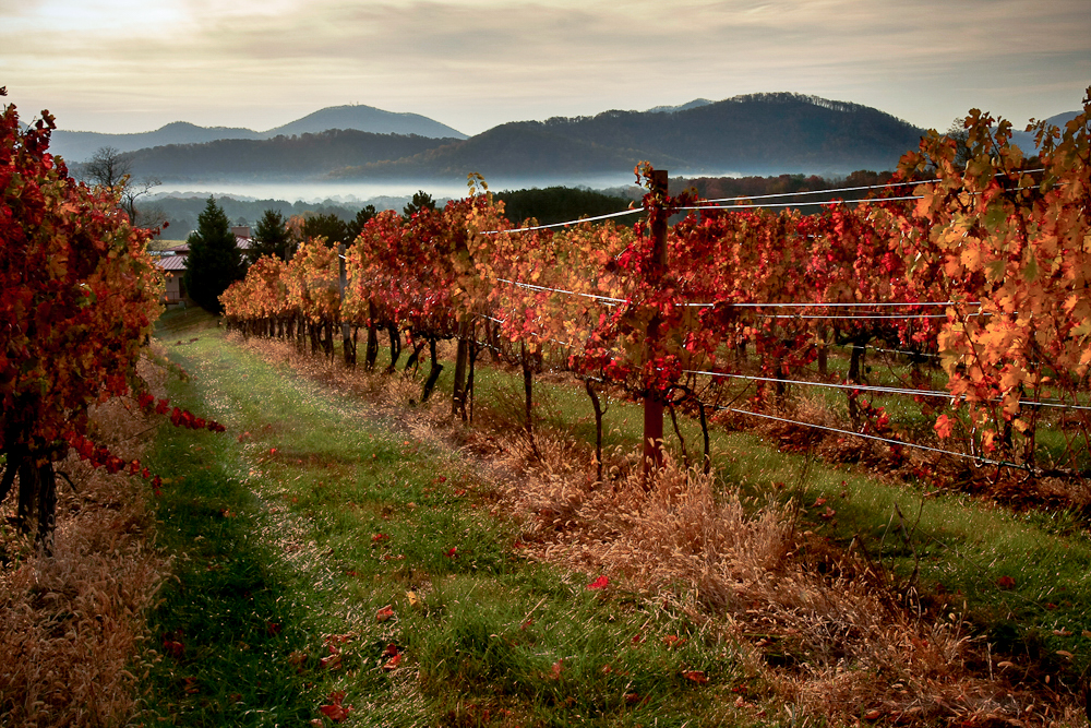 Image: Afton Mountain Vineyard