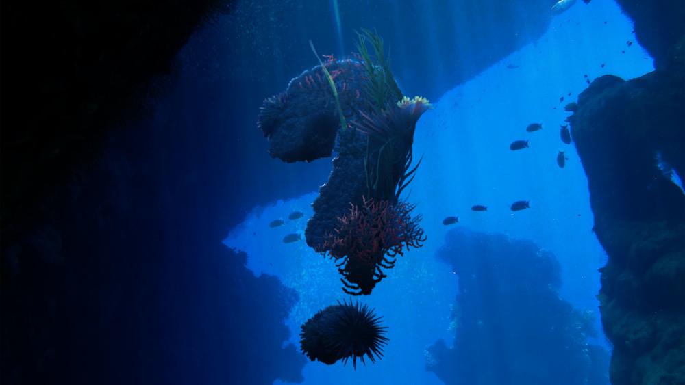 Open_Underwater2.jpg
