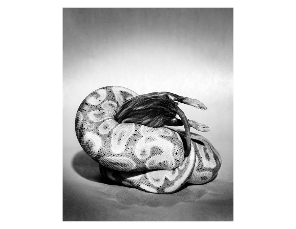untitled (banana constricting rat), 2016.