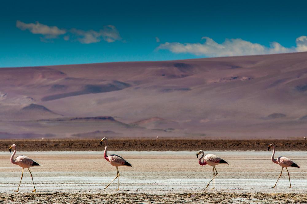 Sudamerica-709.jpg