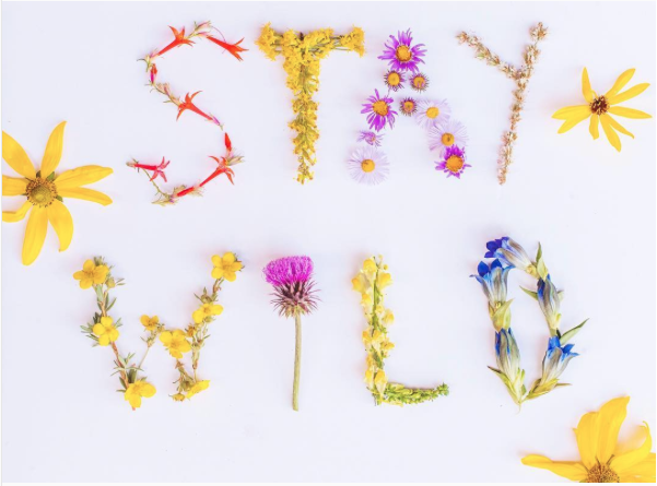 stay wild wildflowers typography cake and confetti blog.png