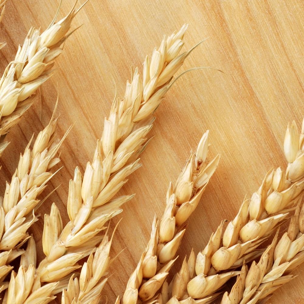 wheat1405.jpg