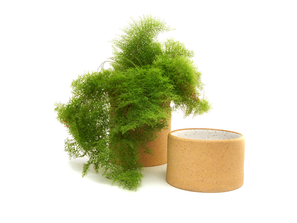Cylinder_Large_Short_Fern.jpg