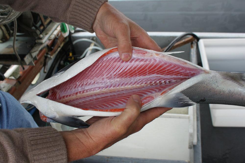 Coho sashimi grade