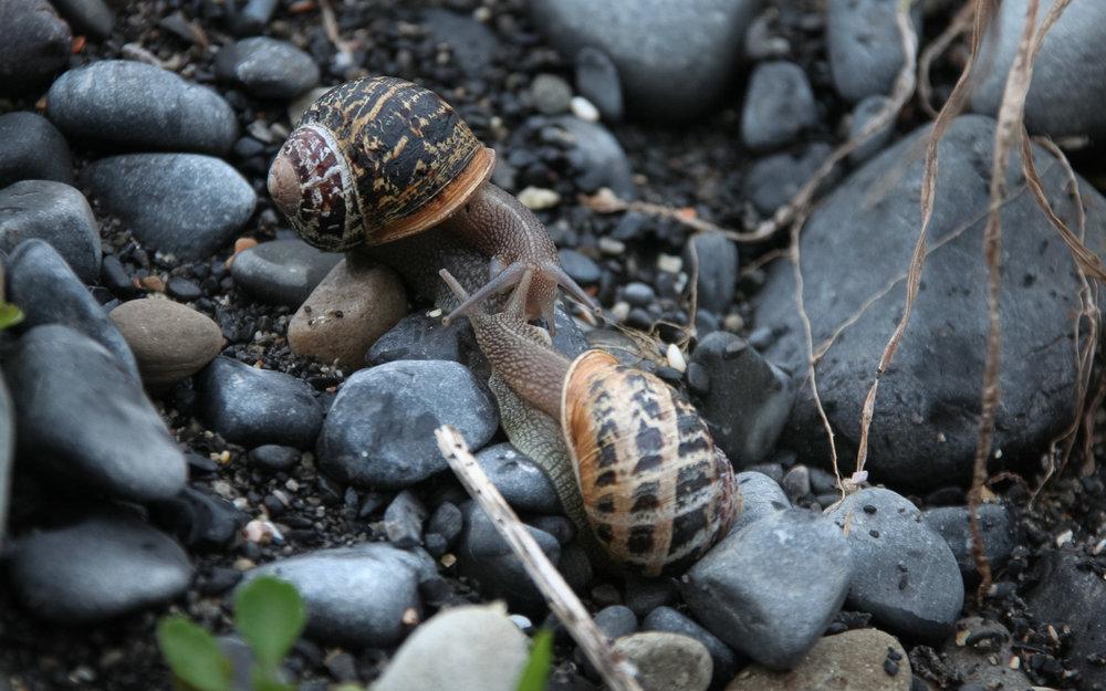 snails1portrait.jpg