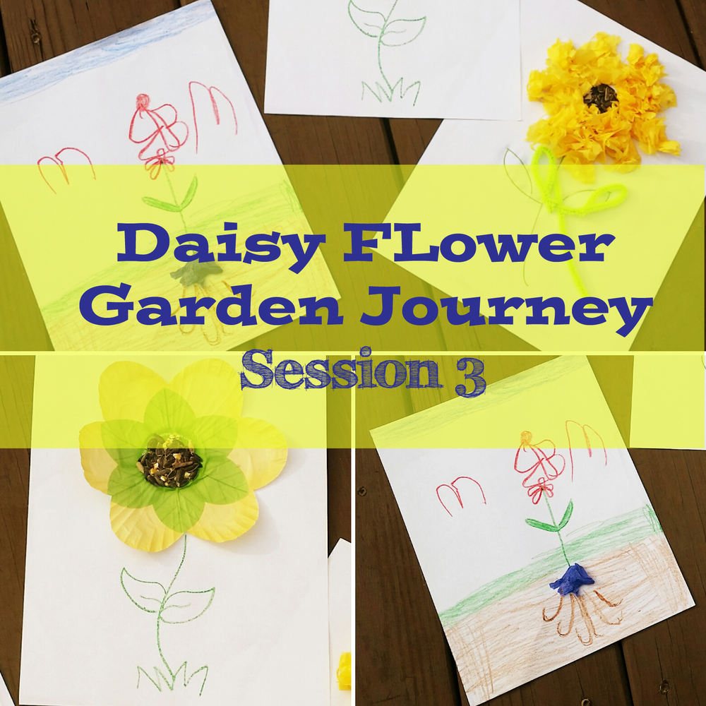 Post mighty girls rock daisy flower garden journey session 3 dhlflorist Image collections