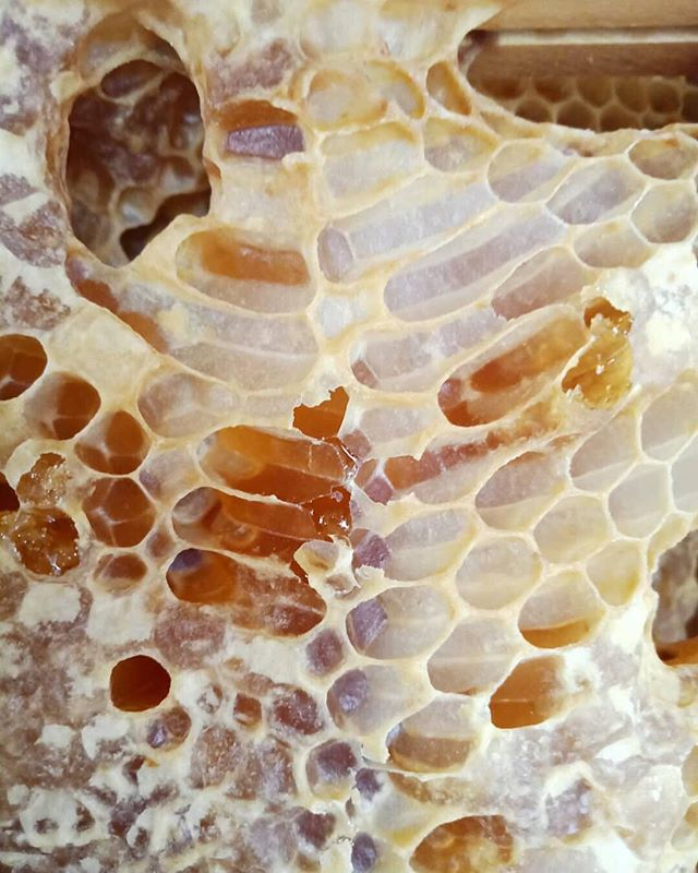 So happy to meet the lovely @rebeccamcewan.artist at @anat_australia SPECTRA. Her studies of pollen grains are exquisite, and I learned from her that just 1mL of honey takes two or three bees their entire lives to make 💛 which I still can't beeleive /ah sorry #art #science #honey #bee #honeycomb #pollen