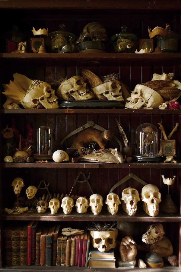 The Cabinet Of Curiosities Challenge Part 1 Dan Baines