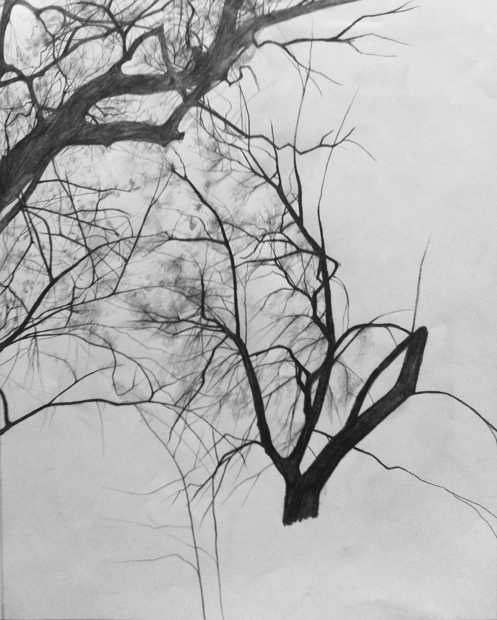 An observational pencil drawing of trees.