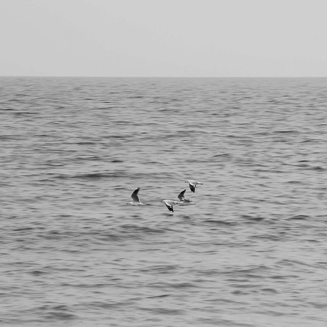 Seagulls in flight⁣⠀ .⁣⠀ Out with the Nikon D80⁣⠀ .⁣⠀ .⁣⠀ #PIstudent #blackandwhitephotography #photographyart #seagulls #westernaustralia #learningphotography