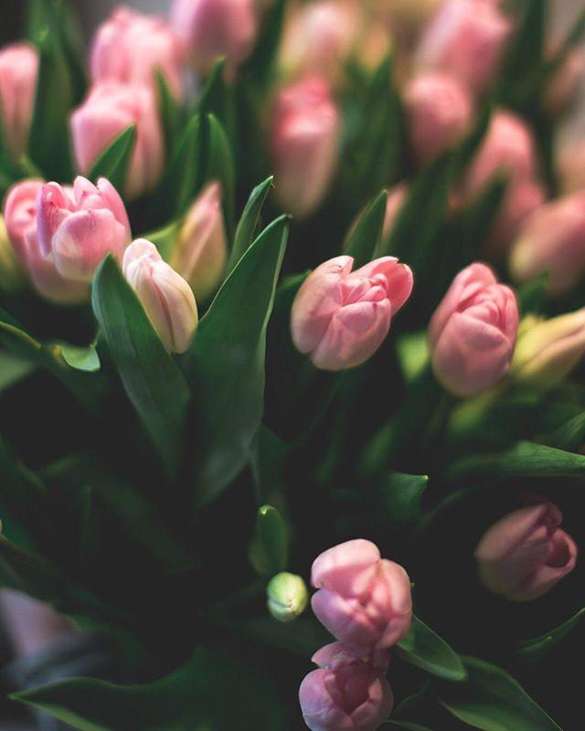 #interior #derpranzl #blumen #flowersandmore #fairtrade #minimalistic #ennstal #irdning #hortensie #hortensien #hydrangeamacrophylla #topshot #plants #servusmagazin #valentinstag #valentinesday #liebe #weilidimog #weilsdubist