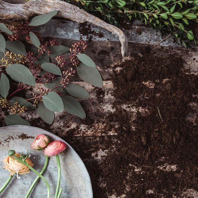 Pünktlich zum 1. März blüht der Frühling auch auf unserer Website auf. 🌷  #interior #derpranzl #blumen #flowersandmore #fairtrade #minimalistic #ennstal #irdning #eucalyptus #bloomingeucalyptus #arrangement #topshot #plants #servusmagazin #stillife #spring #hallofrühling #griaßdifrühling #ranunkel  pic @manuel.peric
