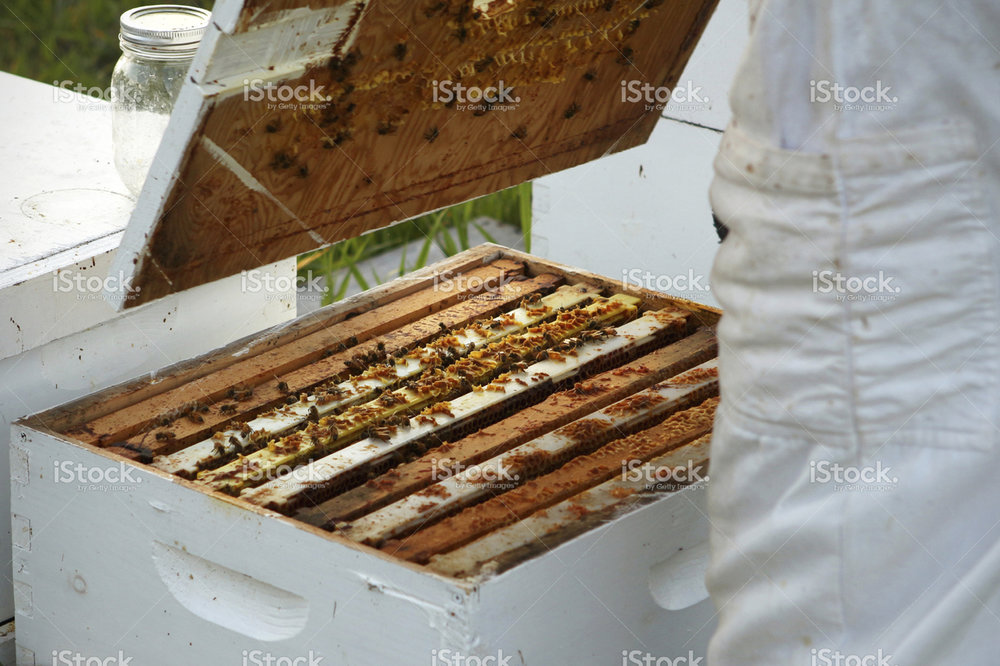 stock-photo-68198255-bee-keeping.jpg