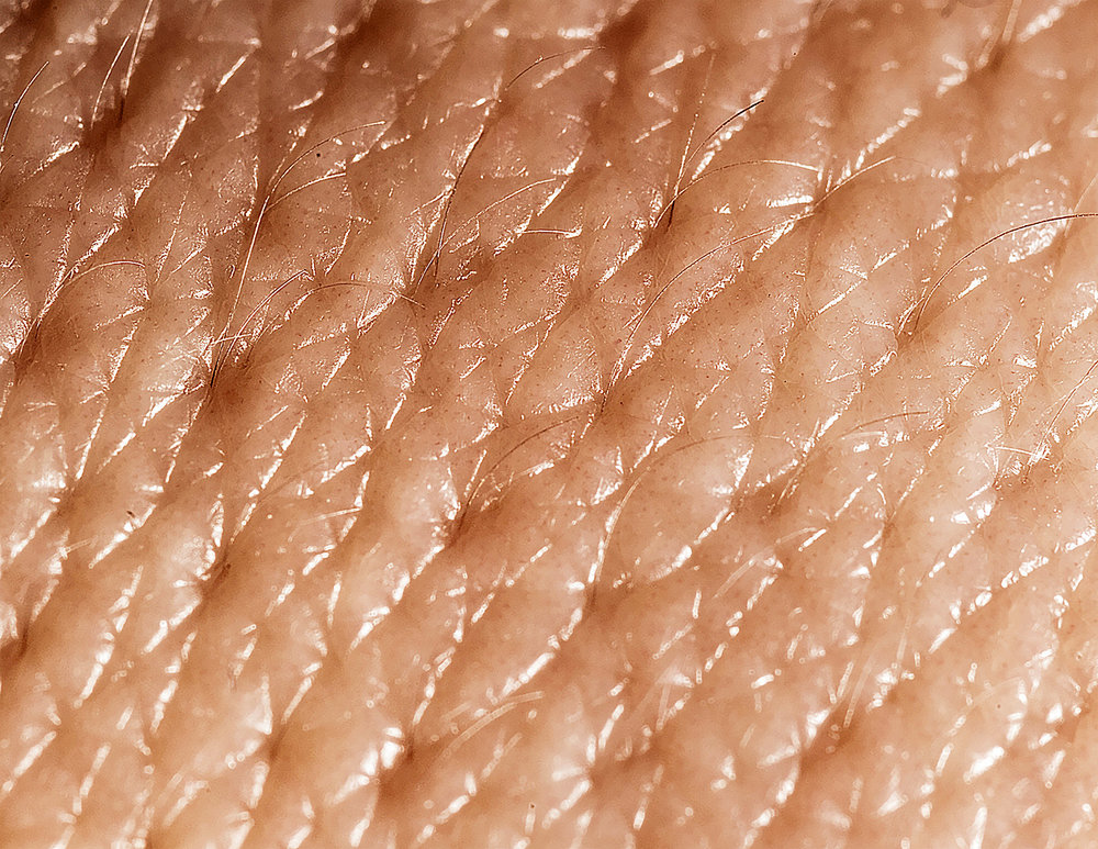 - Skin Largest organ of them all yet only millimeters thick—or thin, depending on the site or state of mind.Water cannot penetrate but sunlight can, at leastenough to make the vitamin that gets the calciuminto the bone. And then there's melanin—polymerized oxidized tyrosine—three differentkinds—that give it color. How much better werethere none or only one. No Civil War. No, betterone, not none—for without it we'd burn too easily,die early melanoma deaths. And then there's allits buried nerves, everywhere, but teeming in thefingers, face. The feel of a kiss.