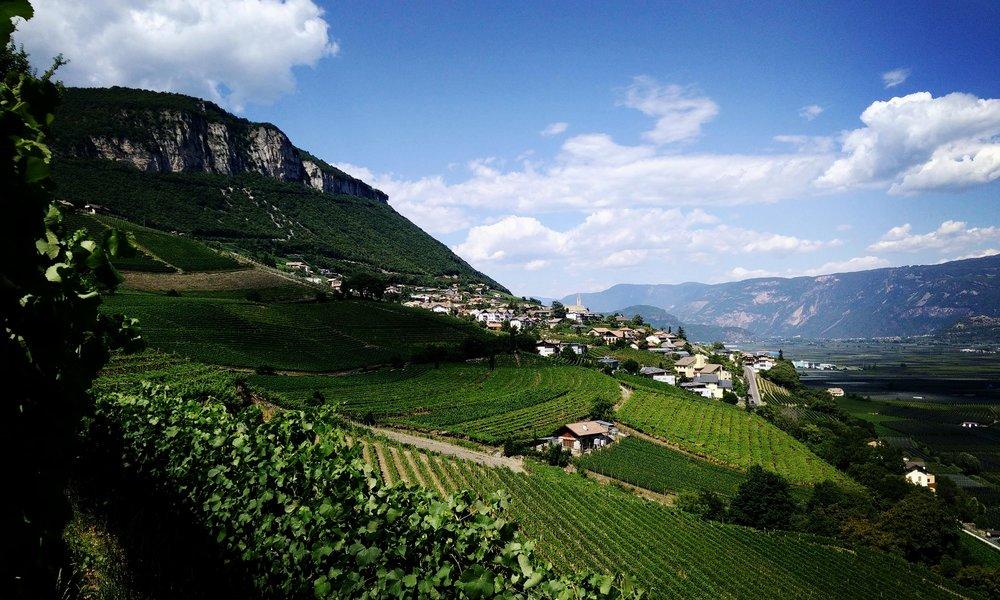 Vineyards in the Sudtirol