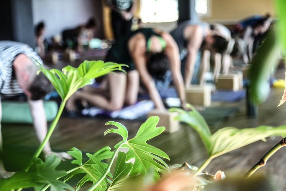 "Vinyasa Basics - Our beginner friendly Vinyasa Basics class is a great place to start your active, ""flow"" yoga practice, or just focus on foundations of the poses! Expect to sweat in an accessible way, and maybe even learn some stuff about why & how we move the way we do on the mat."