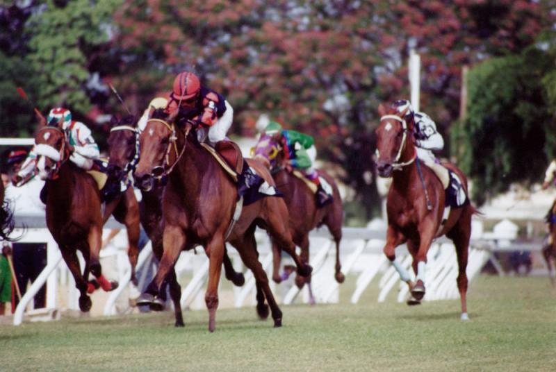 48656838.horsesracing.jpg