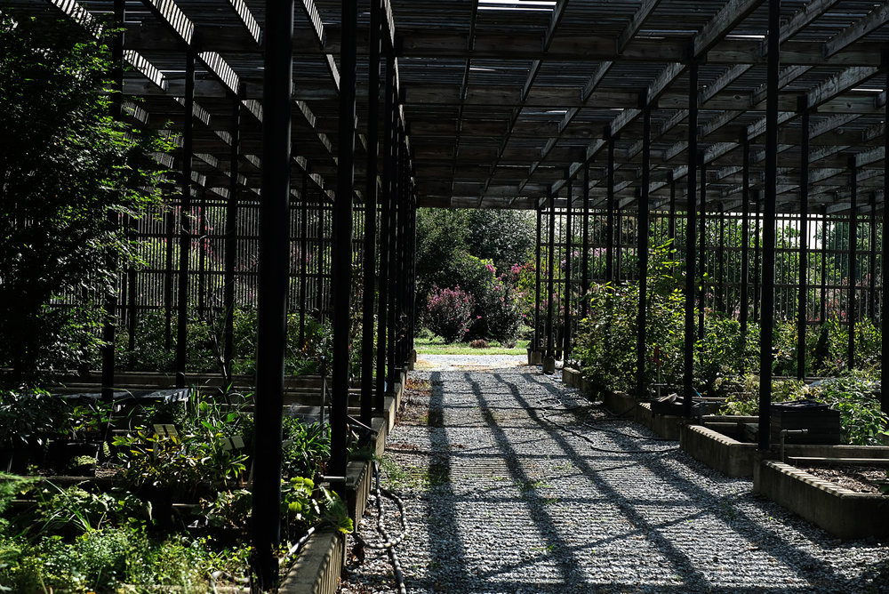 I've been eye-balling this shadehouse ever since I started visiting the Arboretum and I was just giddy to get to walk through these rows. Unfortunately I was too enamored with the water puppies aka koi that I forgot to take pictures of them. Oops