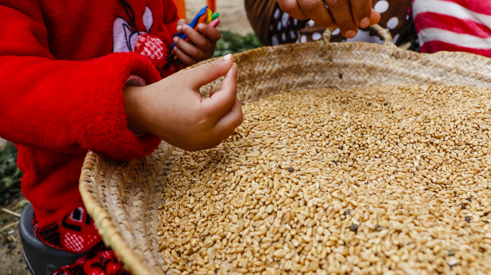 Najat, 3, sorts through wheat with one hand and clutches colored clay with the other. Her mother Wahfeh sits next to her. The women in Beni Koulla spend multiple hours picking the bad kernels out of the harvest to make huge loaves of bread in their community ovens.